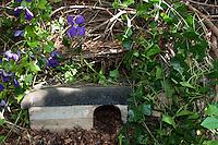 Igel-Unterschlupf, Unterschlupf für Igel zwischen Reisighaufen in einem naturnahen Garten, Igelhütte, Igel-Hütte aus einer Holzkiste mit regendichtem Dach, Tierfreundlicher Garten, Naturgarten, Igelschutz, Igel-Schutz, Igelhilfe, Erinaceus europaeus, Shelter for hedgehogs between brushwood piles in a natural garden, Hedgehog Cottage, natural garden
