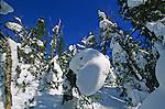Monts Valin.  Ici les tempêtes de neiges peuvent accumuler six mètres de neige. Seuls le sommet des arbres sort de de la neige et cache des trous très dangereux. Monts Valin, au nord de Chicoutoumi. Québec. Canada.