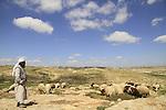 Judea, Southern Hebron Mountain, a flock of sheep in the vicinity of biblical Carmel