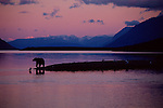 A brown bear is silhouetted at the end of the day by an uncommon rosy sunset on the coast of Naknek Lake in Katmai National Park, Alaska.  Much of the year this finger of land is shrouded in fog and rain.