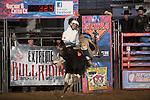 SEBRA - Beckley, WV - 1.17.2014 - Bulls & Action