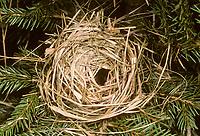 Zwergmaus, Nest, Zwergmaus-Nest, Zwergmausnest, Zwerg-Maus, Eurasische Zwergmaus, Maus, Mäuse, Halmkletterer, Micromys minutus, Harvest Mouse, Eurasian Harvest Mouse, Rat Des Moissons