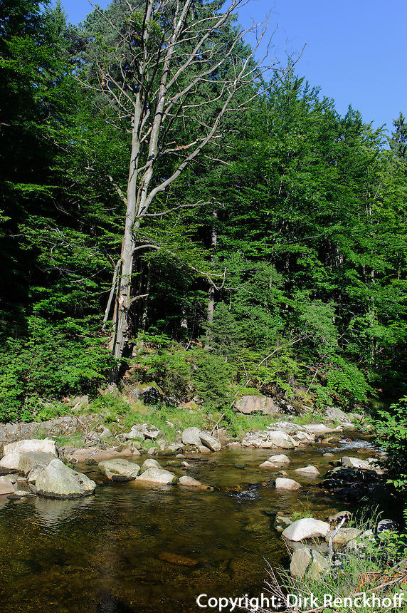 Bach im Karkonowski Nationalpark im Riesengebirge, Woiwodschaft Niederschlesien (Województwo dolnośląskie), Polen, Europa<br /> Creek in Karkonowski National park, Poland, Europe