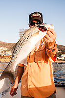 The Spotted Sea Bass in a not very common member of the Moronidae family, its distribution is in fact more limited than the European Sea Bass.