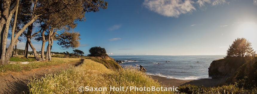 The Sea Ranch - late afternoon Pacific Ocean view from Bluff trail at Pebble Beach, Sonoma County public access