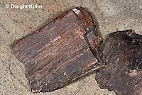 CX15-522z Petrified Wood Fossil