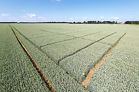 Winter wheat pesticide trials - Lincolnshire, June