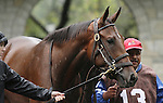 Culprit in the paddock before the 23rd running of the Bourbon Grade 3 $150,000 at Keeneland Race Course.   October 06, 2013.