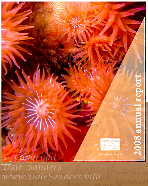 2008 Annual Report Cover for Living Oceans Society.