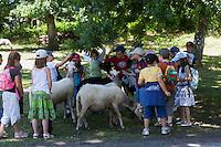 Europe/France/Aquitaine/40/Landes/ Marquèze: Ecomusée de Marquèze, l'Ecomusée de  la Grande Lande Enfants d'une colonie de vacances  découvrant les moutons  de la propriété