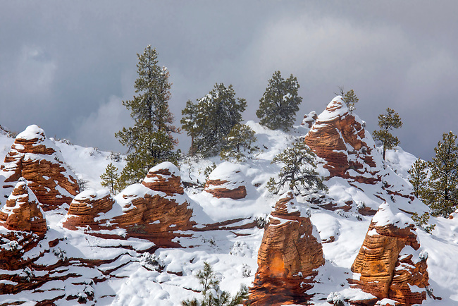 Fresh snow has fallen on the Kolob Terrace area in and around Zion National Park, Utah