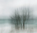 """As Christmas Eve approached, with no family or friends near, and the pandemic still raging, the wind and lake were in a mood. """"I was trying to capture the feeling of it,"""" Tusa says, """"the riled-up water, the cold and the vulnerability of all of us. I focused on this this lonely stand of trees, and employed a very slow shutter speed, some exaggerated camera movement and a bit of over exposure to come as close as I could."""""""