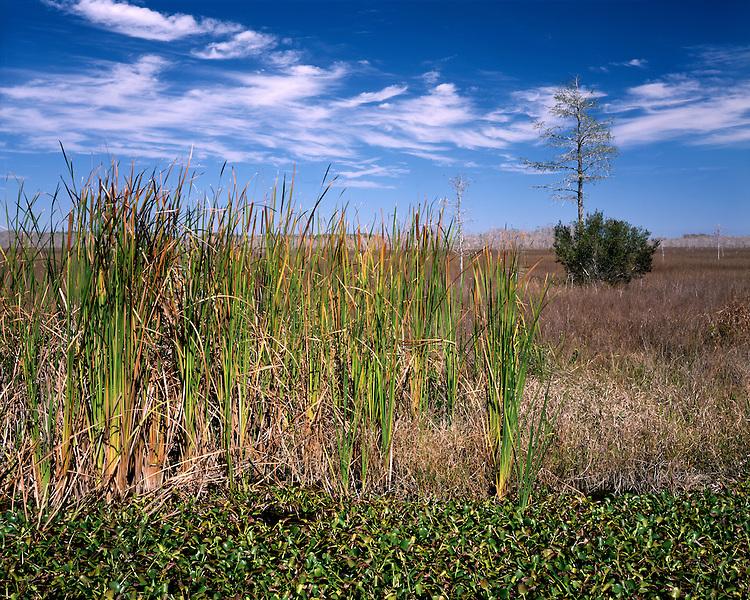Swampy pond and grassy plains; Big Cypress National Preserve, FL