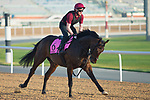 DUBAI,UNITED ARAB EMIRATES-MARCH 29: Seahenge,trained by Aidan O'Brien,exercises in preparation for the UAE Derby at Meydan Racecourse on March 29,2018 in Dubai,United Arab Emirates (Photo by Kaz Ishida/Eclipse Sportswire/Getty Images)