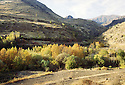Irak 2000.Automne dans les montagnes.Iraq 2000.Valley and trees in the autumn's season