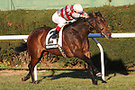 11 13 2010: Mekong Melody (IRE) with Alex Solis up win the 54th running of the Grade III Long Island Handicap for fillies and mares, 3-year olds & up, at 1 1/2 miles on the turf, Aqueduct Racetrack, Jamaica, NY. Trainer Roger Attfield. Owners David C. Egan.