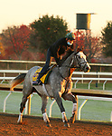 Tacitus, trained by trainer William I. Mott, exercises in preparation for the Breeders' Cup Classic at Keeneland Racetrack in Lexington, Kentucky on October 31, 2020.