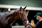 April 28, 2021: Derby contender Highly Motivated gets a bath at Churchill Downs in Louisville, Kentucky on April 28, 2021. EversEclipse Sportswire/CSM