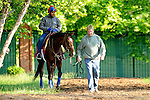 Baltimore, MD- May 17: 137th Preakness Contender Went The Day Well trained Graham Motion works out in preparation fpr the Preakness at Pimlico Race Course in Baltimore, MD on 05/17/12. (Ryan Lasek/ Eclipse Sportswire)