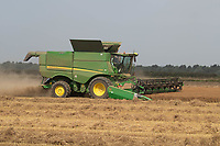 20-7-2021 Harvesting  Winter Linseed in Lincolnshire<br /> ©Tim Scrivener Photographer 07850 303986<br />      ....Covering Agriculture In The UK....