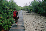 Pathway across the mangrova to reach the turtle reserve. Curieuse island