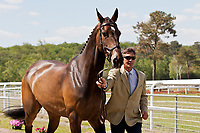 NZL-Andrew Nicholson (VISCOUNT GEORGE) 2012 FRA-Saumur International Horse Trial: FIRST HORSE INSPECTION - Wed 16 May - ACCEPTED - CCI***