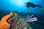 Bonaire, Netherland Antilles Photos