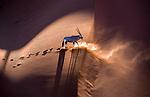 Namibia, Namib-Naukluft National Park, gemsbok (Oryx gazella)