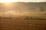 Europa, DEU, Deutschland, Rheinland-Pfalz, Hunsrueck, Benzweiler, Morgenstimmung, Nebel, Pferde, Natur, Umwelt, Landschaft, Landschaftsfotos, Landschaftsfotografie, Landschaftsfoto, Wetter, Wetterelemente, Wetterlage, Wetterkunde, Witterung, Witterungsbedingungen, Wettererscheinungen, Meteorologie, Wettervorhersage, <br /> <br /> [Fuer die Nutzung gelten die jeweils gueltigen Allgemeinen Liefer-und Geschaeftsbedingungen. Nutzung nur gegen Verwendungsmeldung und Nachweis. Download der AGB unter http://www.image-box.com oder werden auf Anfrage zugesendet. Freigabe ist vorher erforderlich. Jede Nutzung des Fotos ist honorarpflichtig gemaess derzeit gueltiger MFM Liste - Kontakt, Uwe Schmid-Fotografie, Duisburg, Tel. (+49).2065.677997, ..archiv@image-box.com, www.image-box.com]