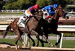 ARCADIA, CA: October 05: #2 Lady Ninja (outside) and jockey Drayden VanDyke rundown #6 Selcourt (inside) to win the Grade III LA Woman Stakes at Santa Anita Park on October 05, 2019 in Arcadia, California (Photo by Chris Crestik/Eclipse Sportswire)