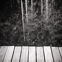 Reflection in trees in water off pier&#xA;<br />