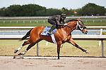 #60.Fasig-Tipton Florida Sale,Under Tack Show. Palm Meadows Florida 03-23-2012 Arron Haggart/Eclipse Sportswire.