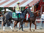 Dream Maker in the post parade as Mind Control (no. 2) wins the Hopeful Stakes (Grade 1), Sep. 3, 2018 at the Saratoga Race Course, Saratoga Springs, NY.  Ridden by John Velazquez, and trained by Gregory Sacco, Mind Control finished  3/4 lengths in front of Mucho (No. 7).  (Bruce Dudek/Eclipse Sportswire)