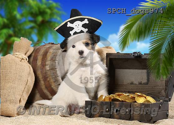 Xavier, ANIMALS, REALISTISCHE TIERE, ANIMALES REALISTICOS, dogs, photos+++++,SPCHDOGS974,#A#