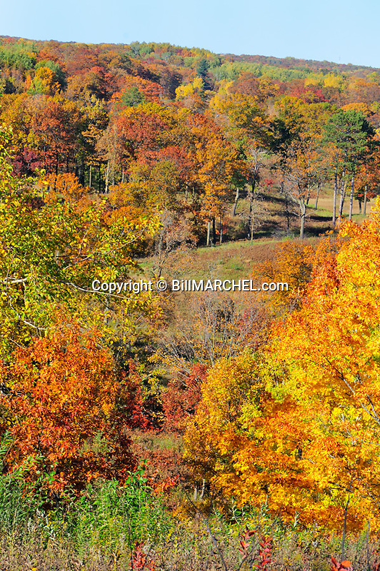 00440-010.14 Fall Color: Mix of mostly oak, aspen and birch are in peak of color.  Meadow in background. Mix of wildlife habitat. Brilliant, colorful.
