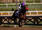 OCT 25: Breeders' Cup Turf Sprint entrant Legends of War, trained by Doug F. O'Neill, works out with Rafael Bejarano at Santa Anita Park in Arcadia, California on Oct 25, 2019. Evers/Eclipse Sportswire/Breeders' Cup