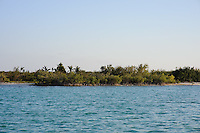 Mangroves on Little Cayman