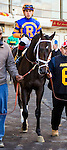 OZONE PARK, NY - NOVEMBER 26, 2016: Win With Pride #6 in the paddock for the Grade 2 Remsen Stakes for 2-year olds, at Aqueduct Racetrack . (Photo by Sue Kawczynski/Eclipse Sportswire/Getty Images)