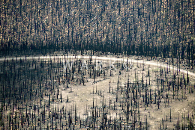 Forest fire burn scar. West Fork Complex fire, Mineral County, Colorado.  July 2013.  80405