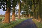 Europa, DEU, Deutschland, Nordrhein Westfalen, NRW, Rheinland, Niederrhein, Kranenburg, Naturschutzgebiet Kranenburger Bruch, Allee, Baeume, Typische Baumallee, Pappeln, Weg, Strasse, Kategorien und Themen, Natur, Umwelt, Landschaft, Jahreszeiten, Stimmungen, Landschaftsfotografie, Landschaften, Landschaftsphoto, Landschaftsphotographie, Naturschutz, Naturschutzgebiete, Landschaftsschutz, Biotop, Biotope, Landschaftsschutzgebiete, Landschaftsschutzgebiet, Oekologie, Oekologisch, Typisch, Landschaftstypisch, Landschaftspflege....[Fuer die Nutzung gelten die jeweils gueltigen Allgemeinen Liefer-und Geschaeftsbedingungen. Nutzung nur gegen Verwendungsmeldung und Nachweis. Download der AGB unter http://www.image-box.com oder werden auf Anfrage zugesendet. Freigabe ist vorher erforderlich. Jede Nutzung des Fotos ist honorarpflichtig gemaess derzeit gueltiger MFM Liste - Kontakt, Uwe Schmid-Fotografie, Duisburg, Tel. (+49).2065.677997, ..archiv@image-box.com, www.image-box.com]