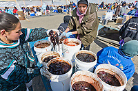 Bowhead whale meat fermented in whale blood for about four weeks, a delicacy at the Nalukataq festival, celebrating the successful subsistence spring Bowhead whale hunt, Utqiagvik (Barrow), Alaska.