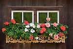 Italy, South Tyrol, Alto Adige, Dolomites, near San Vigilio di Marebbe, Pieve di Marebbe: farmhouse, window, flowers, at Valle di Tamores, tributary valley of Val Badia