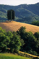 Europe/Italie/Emilie-Romagne/Vallée de Savena : Cyprès