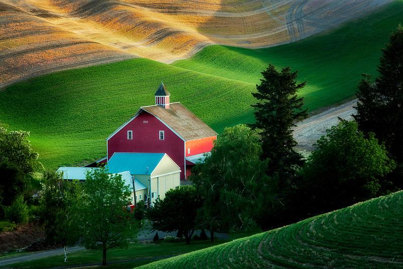 New spring wheat growth and barn. The Palouse, near Colfax, Washington.