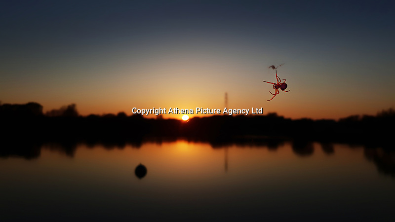 Pictured: A silhouette of a spider is seen against the setting sun over a pond in the Five Lakes Resort near Colchester, England, UK.<br /> Re: Sunshine and high temperatures has been experienced by most pats of the UK during the Easter Bank Holiday Weekend.