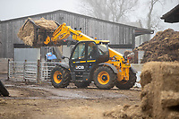 3-3-2021 JCB Tele-Handler moving straw on a dairy farm<br />  ©Tim Scrivener Photographer 07850 303986<br />      ....Covering Agriculture In The UK....