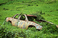 Old wrecked and painted car. Upland, Maui, Hawaii.