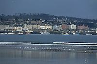 Europe/France/Bretagne/29/Finistère/Douarnenez: La ville et la baie