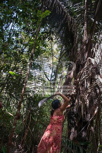 Aldeia Baú, Para State, Brazil. Maria Kokoniek harvesting babassu nuts with a machete knife.