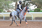 Track Work: February 19 2021: Track work from King Abddulaziz Racetrack, Riyadh, Saudi Arabia. Shamela Hanley/Eclipse Sportswire/CSM FEBRUARY 19 2021: The Saudi Cup Preparations.